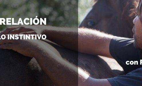 Clinic masajes rehabilitacion caballos