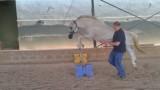 inteligencia-emocional-caballos