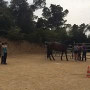 ee-caballos-y-adolescentes