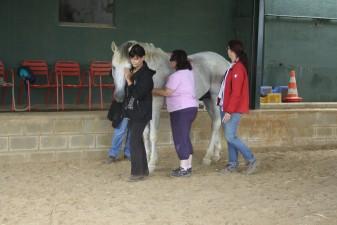 curso de inteligencia emocional con caballos