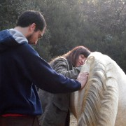 Emotional Intelligence activity with horses for a better emotional self-awareness