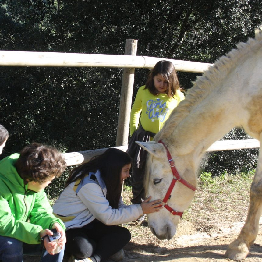 El grupo de educación emocional con caballos junto a Espino un caballo que le encanta estar con las personas y los niños